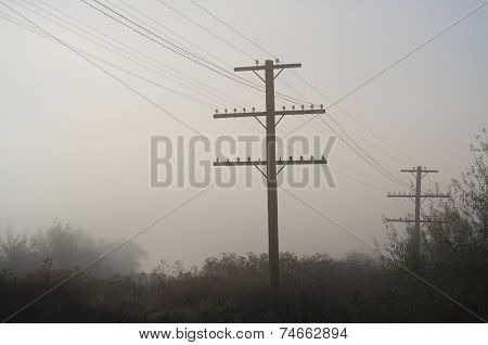 Utility Poles Standing In The Stillness Of Early Morning