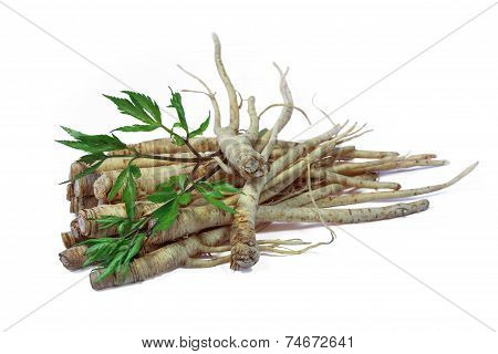 Fresh Ginseng Root.
