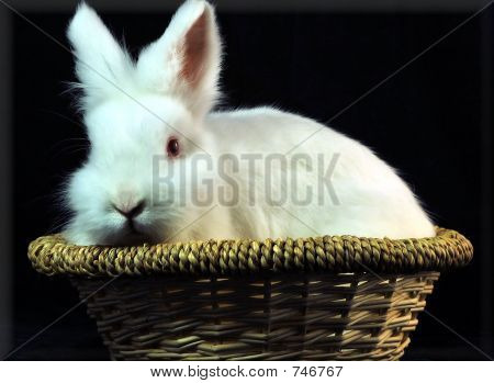 basketcase bunny
