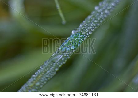 Close Up Of Dew On A Blade Of Grass