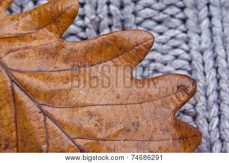 Texture Of A Oak Leaf On Cardigan, Autumn Concept