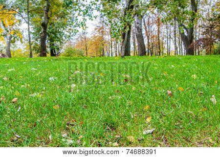 Autumn Landscape, Background Of Autumn Leaves.