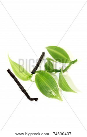 Dark Vanilla Sticks With Green Vanilla Leaves