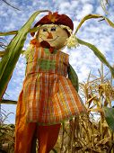 picture of scarecrow  - Colorful Harvest Scarecrow in corn rows of California - JPG