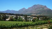 image of south-western  - Vineyards in Western Cape South Africa with blue sky - JPG