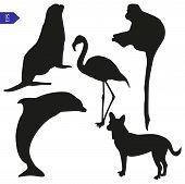 stock photo of bird-dog  - Vector silhouettes of seal dog flamingo dolphin and monkey - JPG
