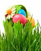 foto of oxen  - Easter colored eggs an ox - JPG