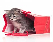 picture of puss  - Cute little kitten in a gift bag isolated on white background - JPG