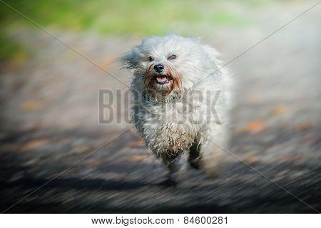 Hochgeschwindigkeits Hund
