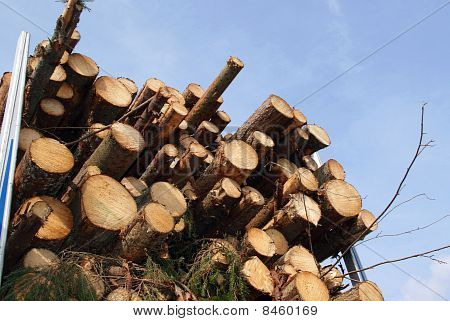 Energy Wood By The Truck Trailer Load