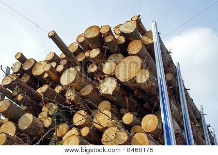 Energy Wood On Logging Truck Trailer