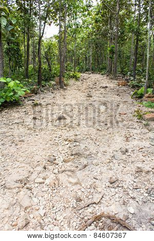 Road In Forest , Thailand Asia