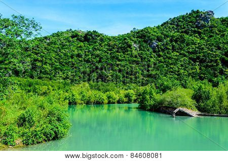 Mangrove Forest And Blue River