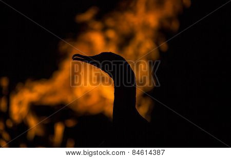 A cormorant sits in front of some flames