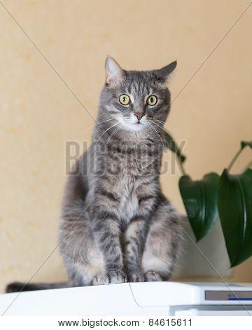 Cat On Refrigerator