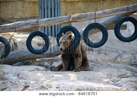 Bear With Tire