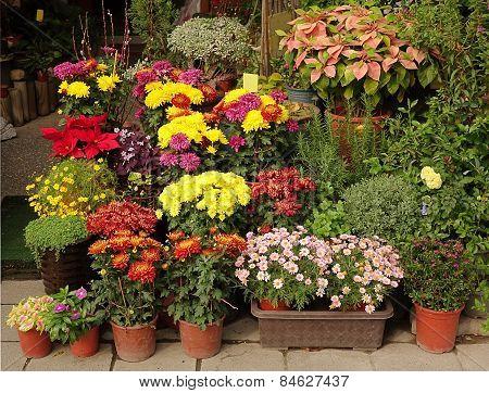 Outdoor Flower Shop