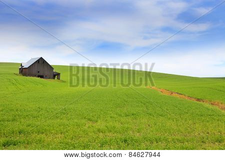 Old Barn in the middle of wheat fields