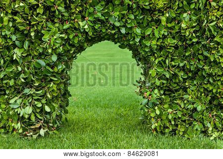 English Garden. Green Hedge With An Arch And Grass