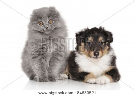 Dog And Cat Together On White Background