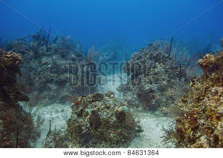 Bahamian Reef