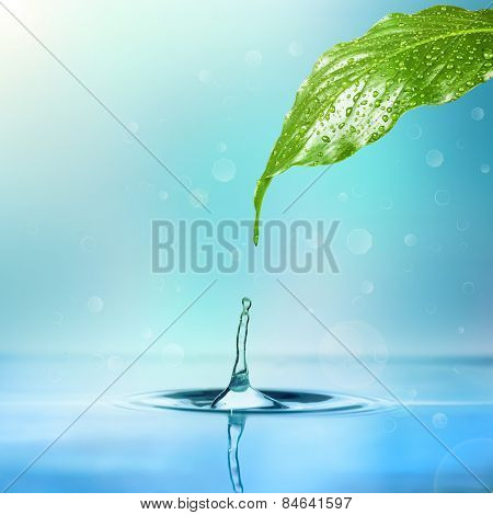 drop of rain dripping into the water from a leaf on a white background