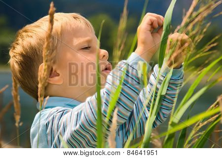 Little boy playing in tall grass
