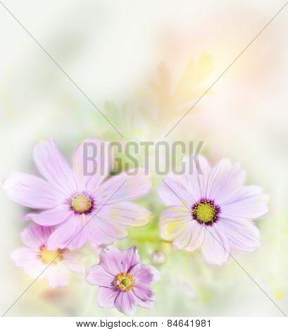 Digital Painting Of Purple Cosmos Flowers,Soft Focus