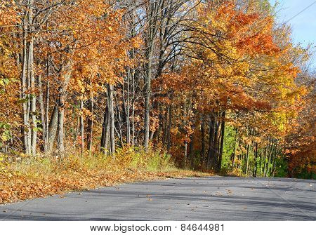 Country road lined with tall trees with beautiful Autumn colors of orange and gold