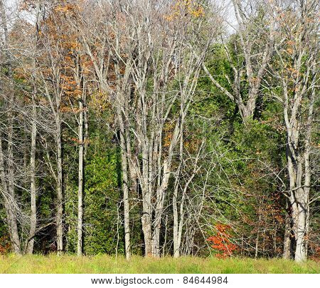 Tall barren trees that have lost their leaves during the Fall Season