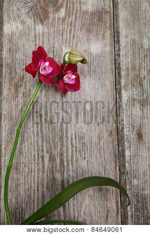 Orchid(phalaenopsis ) On A Wooden Background