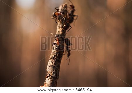Ants On A Stick, Finding Some Food