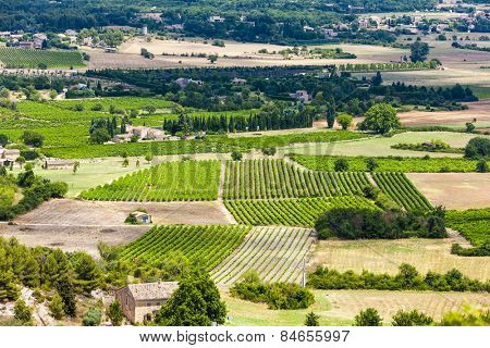 vineyards near Gordes, Vaucluse Department, Provence, France
