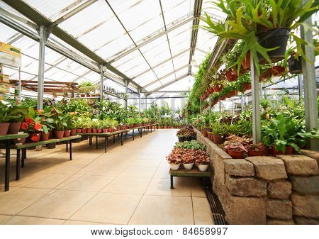 Empty way through greenhouse with many green plants in a garden center