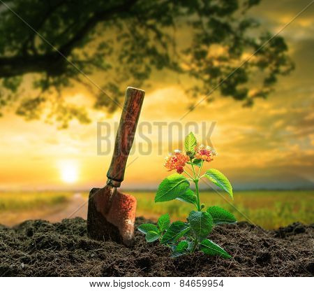 Flowers Plant And Gardening Tool Against Beautiful Sunlight In Green Park Use For People Activities