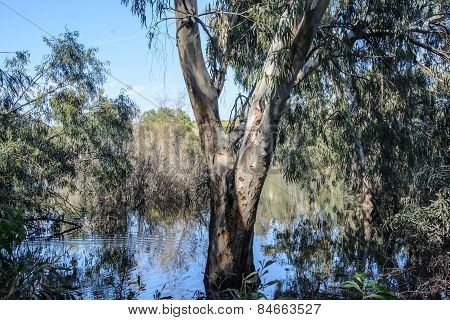 Landscape With Reflection Of  Trees In Water