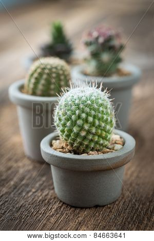 Group Of Cactus On On The Wood Background