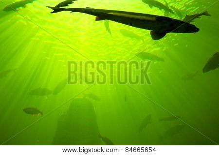 Fishes at the ocean. Underwater photography
