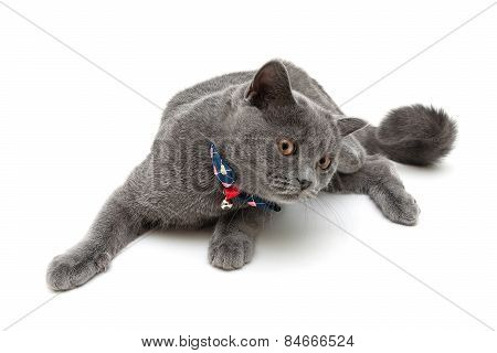 Cat Wearing A Collar With Bow And Jingle Isolated On A White Background