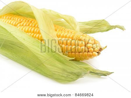 corn on the cob isolated on white background