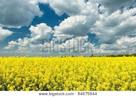 Spring landscape. Yellow rapeseed field and blue sky.