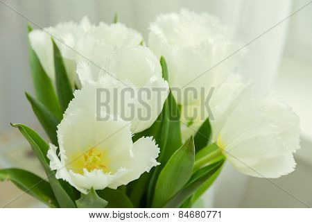 White Tulips With Green Leaves