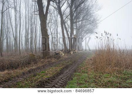 Tire Tracks In A Rural Landscape