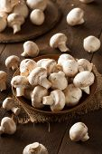 pic of edible mushrooms  - Raw Organic White Mushrooms Ready to Cook With - JPG