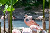 stock photo of pink flamingos  - a flock of pink flamingos on the background of the pond and greenery - JPG