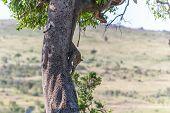 stock photo of veld  - Africa - JPG