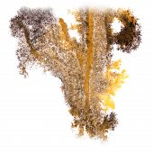 stock photo of insults  - Abstract watercolor background yellow - JPG