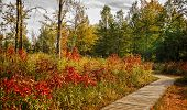 picture of prairie  - A beautiful autumn scene along a winding wood boardwalk with colorful leaves of autumn to look at - JPG
