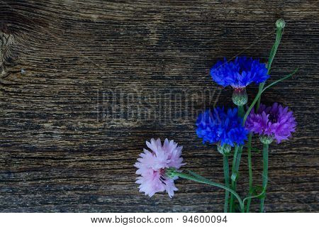 Blue and pink cornflowers