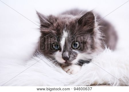 Cute gray kitten on carpet on floor at home